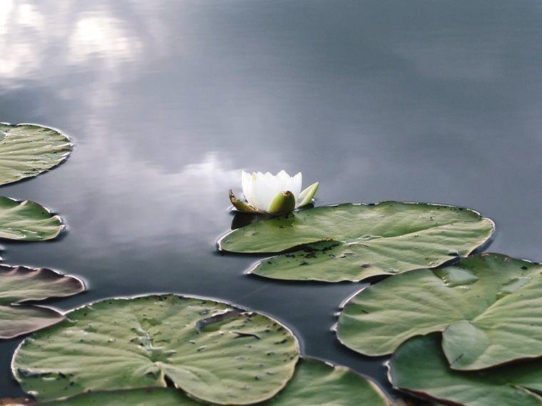 Самое черное озеро Барышского района. Где найти прямоугольные острова 😍