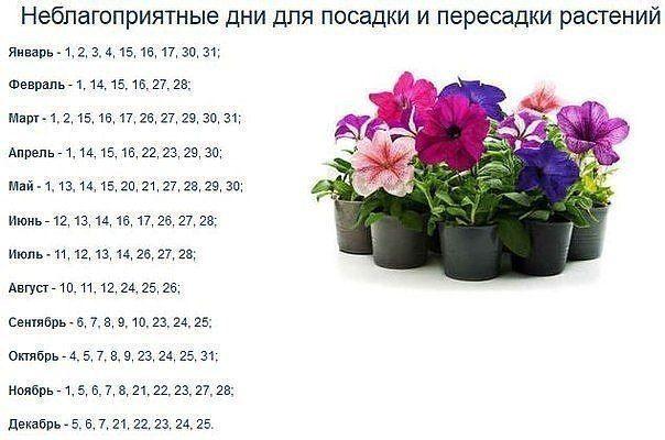 Полезные советы по посадке цветов