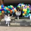 Оформление шарами - Планета шаров