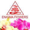 Enigma Flowers Ltd