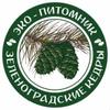 Зеленоградский кедровый питомник
