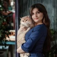 ЛюбовьБританские-Кошки