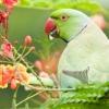 Все о мире попугаев и других пернатых