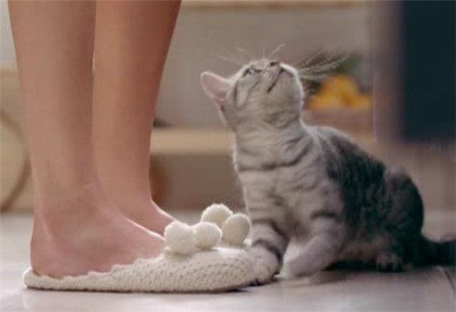 Тапочки из рекламы Вискас