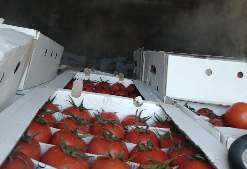 В Оренбургскую область пытались ввезти овощи, фрукты и орехи без документов
