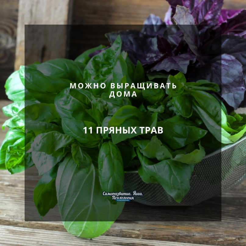 11 пряных трав, которые можно выращивать дома