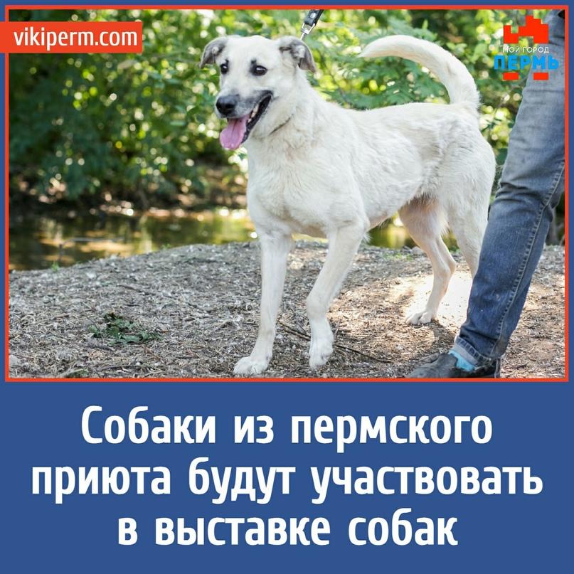 Собаки из пермского приюта будут участвовать в выставке собак