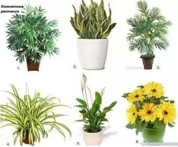 6 растений, которые стоит купить, если в квартире есть курильщик