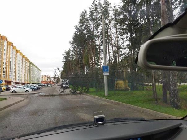 Упавшие деревья, мотоциклы и светофор. Что натворил сильный ветер в Минске за утро