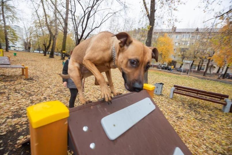 Оборудования для дрессировки собак установлено в Телевизионном сквере в рамках инициативного бюджетирования, сообщает администрация Тюмени.  В... [читать продолжение]