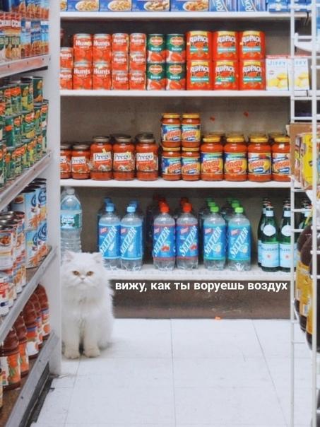 Я в магазине: *просто стою*  Назойливый охранник:  ...