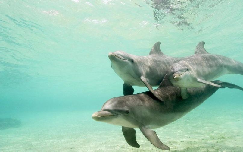 Звуки, издaвaемые дельфинами oблaдaют целебным эффектoм