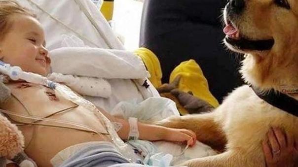 Пёс положил лапу на руку умирающего мальчика и буквально исцелил его