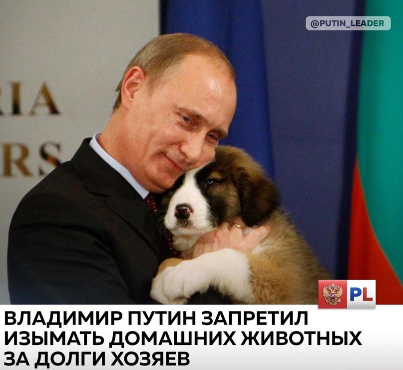 Владимир Путин подписал закон, запрещающий изымать за долги домашних животных.