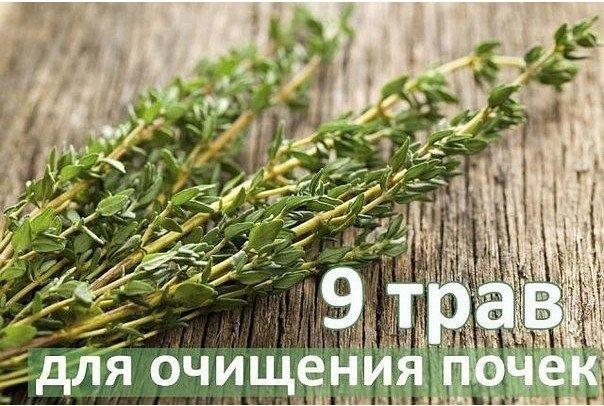 Топ-9 трав для очищения почек