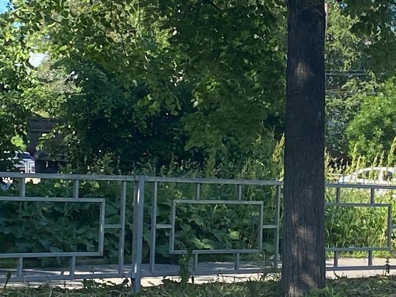 В Вологде выбранный городом подрядчик не справляется с покосом травы на территории города.