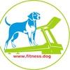 Оздоровительный комплекс для животных ФитнесДог