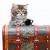 Сибирские/Невские маскарадные породистые котята
