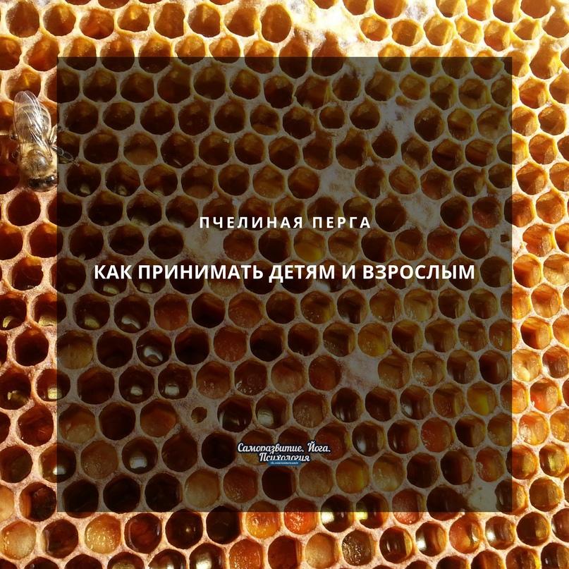 Пчелиная перга — как принимать детям и взрослым этот удивительный пчелиный продукт?