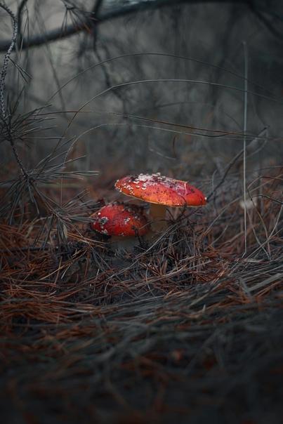 Сказочно в Белгородском лесу ???? Белгород