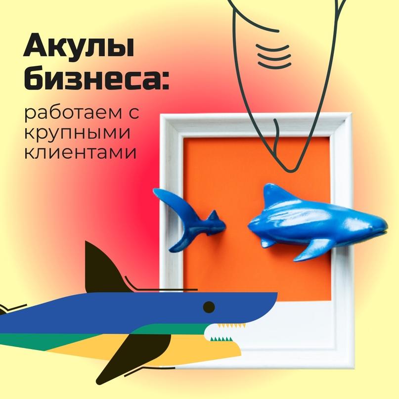 Акулы бизнеса: работаем с крупными клиентами