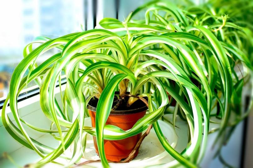 Растения, которые фильтруют воздух.