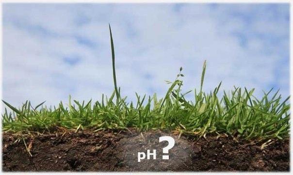 Необычный способ определения кислотности почвы.