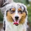 Дрессировка собак - Dogtricks