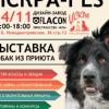ИСКРА-FEST  выставка-пристройство собак из приют