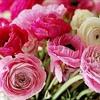 FlowerFirm