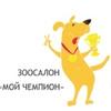Дрессировка собак, хендлинг и груминг в Уфе