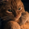Муркин: коты