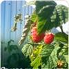 Дача и огород - советы и рецепты опытных садовод