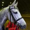 Верховая езда у Евгении г. Дедовск