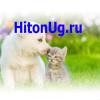 ООО Хитон-Юг