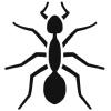 My Ants - Магазин Муравьев
