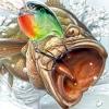 Жизнь и рыбалка