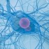 Dendrit - медицина и здоровье