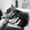 Добрые руки. Собаки и кошки в дар