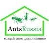 AntHill - Муравьи, муравьиные фермы, формикарии