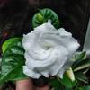 Белый цветок. Уфа