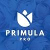 Primula Pro Цветы