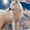 Дети белой волчицы
