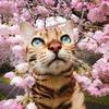 Шедевры Фото/Весна