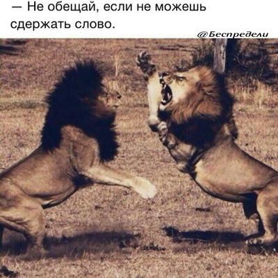 Волк-Против Охотники