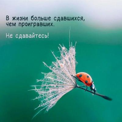 Хава Гелгаева, Грозный