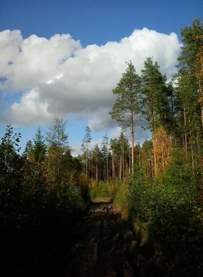 Guide Forest, Котельнич