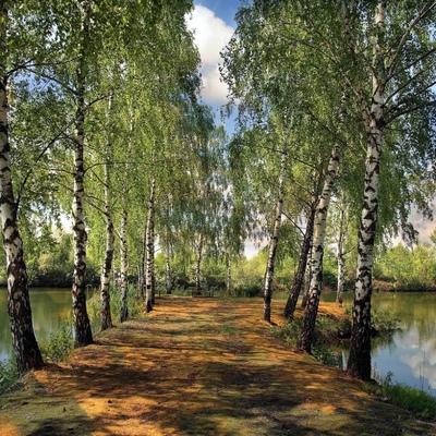 Кира Симонова, Воронеж