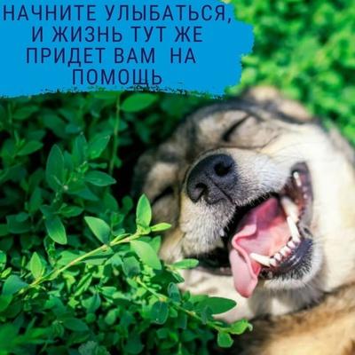Александр Волк, Светлый