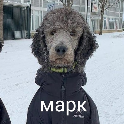 Марк Марков, Новосибирск